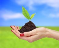 Woman hands are holding green plant over bright nature backgro Royalty Free Stock Images