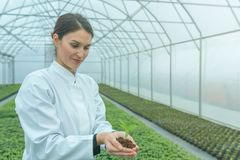 Woman hands holding green plant in soil. New life concept. Agriculture stock photos