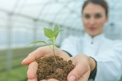 Woman hands holding green plant in soil. New life concept. Agriculture royalty free stock image