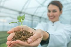 Woman hands holding green plant in soil. New life concept. Agriculture royalty free stock photo