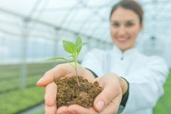 Woman hands holding green plant in soil. New life concept. Science woman royalty free stock images