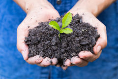 Woman hands holding a green young plant Stock Images