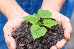 Woman hands holding a green young plant Stock Photos