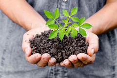 Woman hands holding a green young plant Stock Photo
