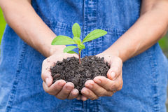 Woman hands holding a green young plant Stock Photography