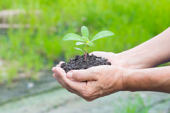 Woman hands holding a green young plant Royalty Free Stock Images