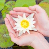 Woman hands holding lotus flower Stock Photography
