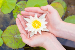 Woman hands holding lotus flower Royalty Free Stock Photo