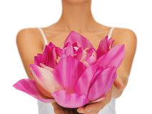 Woman hands holding lotus flower Royalty Free Stock Images
