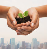 Woman hands holding plant in soil Stock Photography