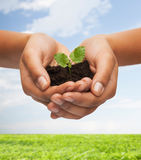 Woman hands holding plant in soil Stock Photos