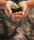Woman hands holding plant in soil. Fertility, environment, ecology, agriculture and nature concept - closeup of woman hands holding plant in soil over ground Stock Image