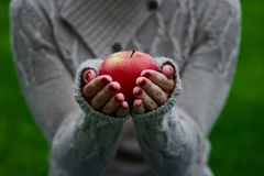 Woman hands holding a red apple Royalty Free Stock Image