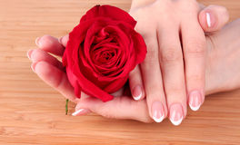 Woman hands holding red rose Royalty Free Stock Image