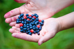 Woman hands holding ripe berries Stock Photos