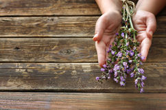 Woman hands holding rosemary flowers Stock Photo