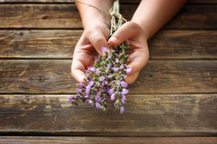 Woman hands holding rosemary flowers Stock Photography