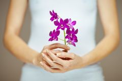 Woman hands holding some violet orchid flowers, sensual studio shot. Can be used as background Royalty Free Stock Photos