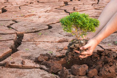 Woman hands holding tree Stock Photography
