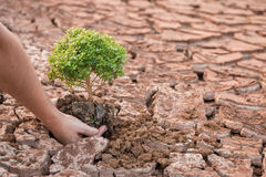 Woman hands holding tree growing Stock Photo