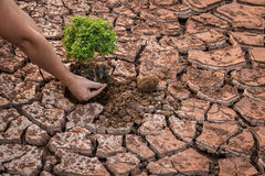 Woman hands holding tree growing Stock Images