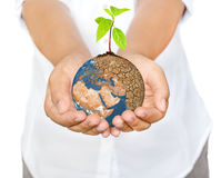 Woman hands holding tree planting on globe warming Royalty Free Stock Photo
