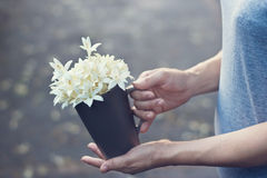 Woman hands holding white flowers in cup on falling flowers background Stock Photography