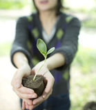 Woman hands holdings a little green plant Stock Photography