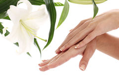 Woman hands and lilly flower Stock Photo