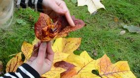 Woman hands make decorative flower beautiful autumn tree leaf. Woman hands make decorative flower from beautiful autumn tree leaf stock video