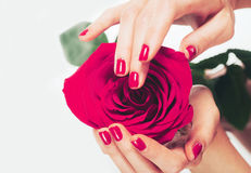 Woman hands manicure pink with rose flower on white Royalty Free Stock Photo