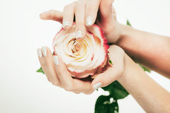 Woman hands manicure red pink white with rose flower isolated on white Royalty Free Stock Photo