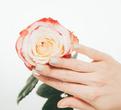 Woman hands manicure red pink white with rose flower on white Stock Photo