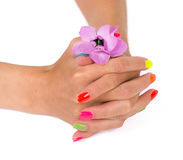 Woman hands with manicure after spa holding flower Royalty Free Stock Photos