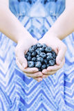 Woman Hands Offering Blueberries Stock Photos