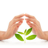 Woman hands over green plant. Royalty Free Stock Photography