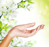 Woman hands  Royalty Free Stock Images