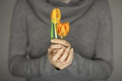 Woman hands with perfect nail art holding pink spring flowers tulips, sensual studio shot Royalty Free Stock Photo