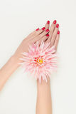 Woman hands with pink flower Stock Photography