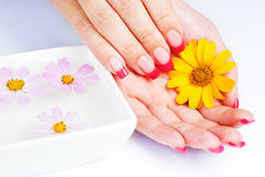 Woman hands with pink manicure. manicure tray Stock Photos