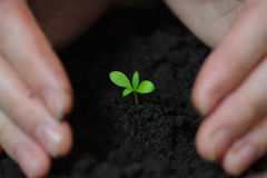 Woman hands are planting seedlings into the soil, ecology and earth day concept.  Royalty Free Stock Photos
