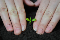 Woman hands are planting seedlings into the soil, ecology and earth day concept.  Stock Photography
