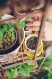 Woman hands planting seedlings in urban garden Stock Photography
