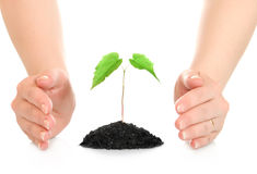 Woman hands protecting small green plant Stock Image