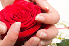 Woman hands with rose petals. Woman hands with red rose petals Royalty Free Stock Photo