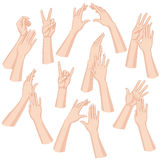 Woman Hands Set. Set of woman hands   on white background Royalty Free Stock Photo