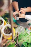 Woman hands showing to girl young seedlings in pot Royalty Free Stock Photo