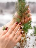 Woman hands with small fir tree royalty free stock image