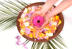 Woman Hands Spa with petals-manicure concept royalty free stock images