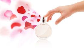 Woman hands spraying rose petals. Close up of woman hands spraying rose petals from beautiful perfume bottle Stock Image